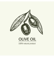 Olive Hand Draw Sketch vector image