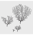 Branches of black coral stylish isolated image vector image