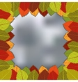 autumn foliage blurred background vector image