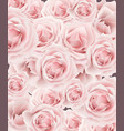 delicate roses pattern background floral vector image