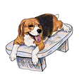 Beagle on chair vector image