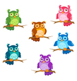 cartoon owl set vector image