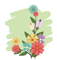 flowers bunch nature spring petal design vector image