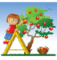 Boy picking apples vector image vector image