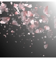 Sakura petals on white background EPS 10 vector image vector image