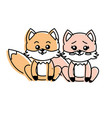 Cute couple fox wild animal with beautiful vector image
