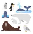 flat style set of arctic animal vector image