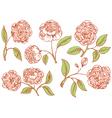 floral rose vector image