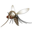 comical mosquito vector image