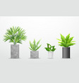 tropical tree in cement pots collections vector image vector image