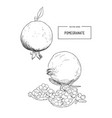 pomegranate engraving sketch etch vector image