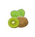 Kiwifruit Isolated on White vector image