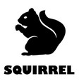 squirrel icon vector image