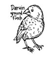 darwin ground finch vector image