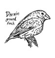darwin ground finch on the tree vector image