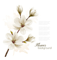 Spring background with blossom brunch of white vector image