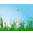 Summer meadow vector image vector image