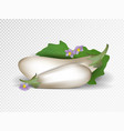 white eggplants isolated on the transparent vector image