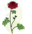 chrysanthemums background vector image
