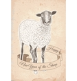 Hand drawn sheep vector image