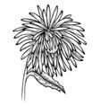 black and white aster flower vector image