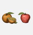 set of hand drawn engraved fresh fruits vector image
