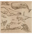 cetaceans cetacea - an hand drawn pack sketching vector image