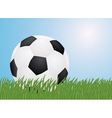 football in a grass vector image vector image