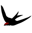black swift vector image