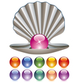 pearls and a shell vector image