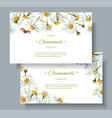 Chamomile flower banners vector image