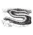 Brazen Lizard vintage engraving vector image