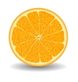 oranges slice over white vector image