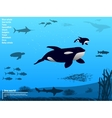 Infographics ocean sea underwater world vector image