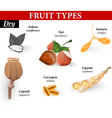 Types of simple fruit vector image
