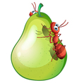 A pear with two ants vector image