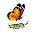plain tiger butterfly and caterpillar vector image