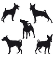 Miniature Pinscher vector image