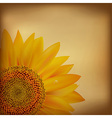 Vintage Paper With Sunflower vector image vector image