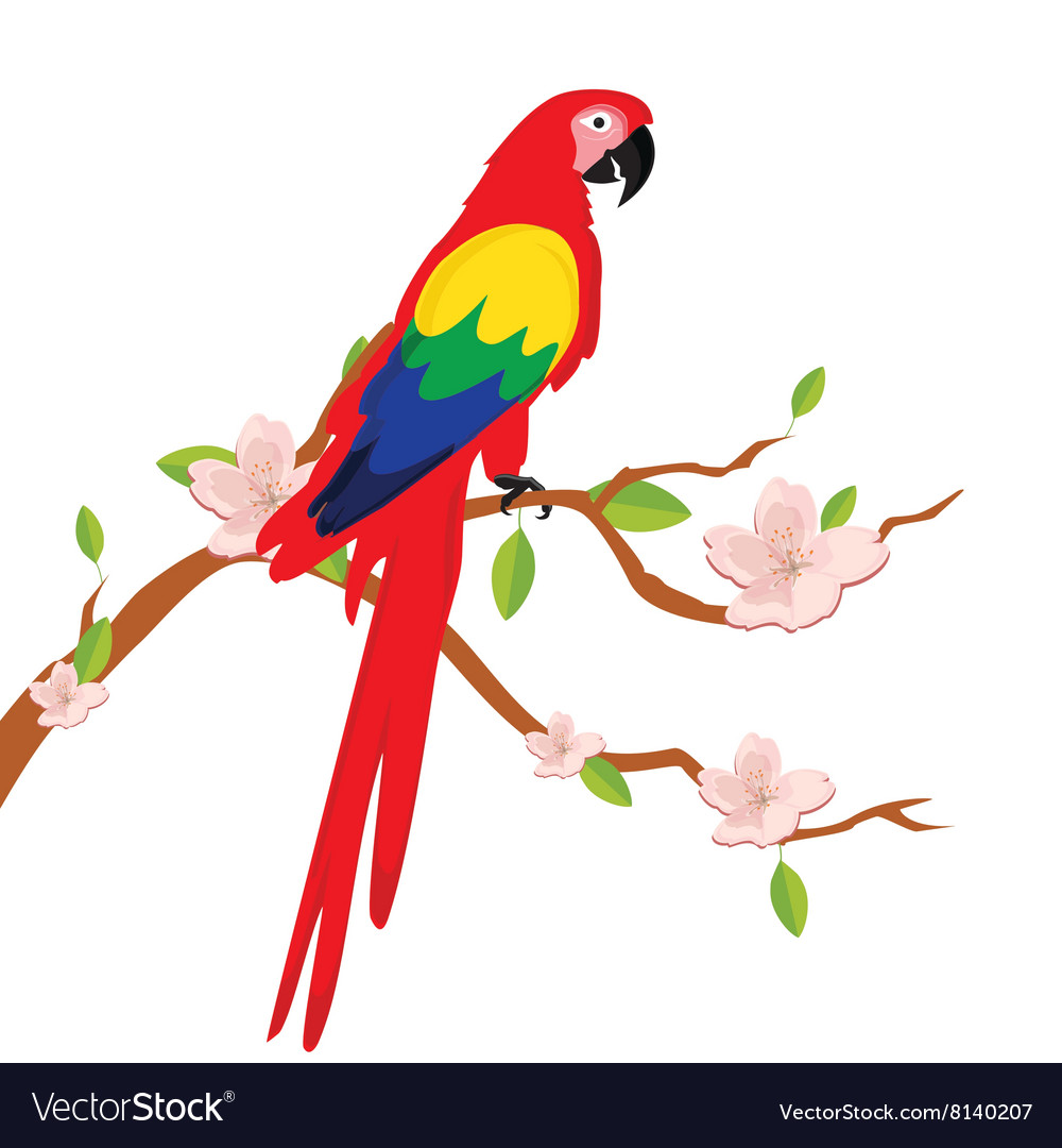 Macaw parrot on tree vector