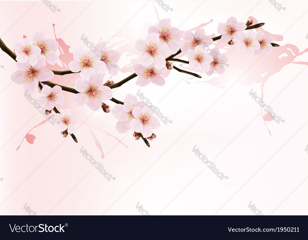 Nature background with blossoming sakura branch vector