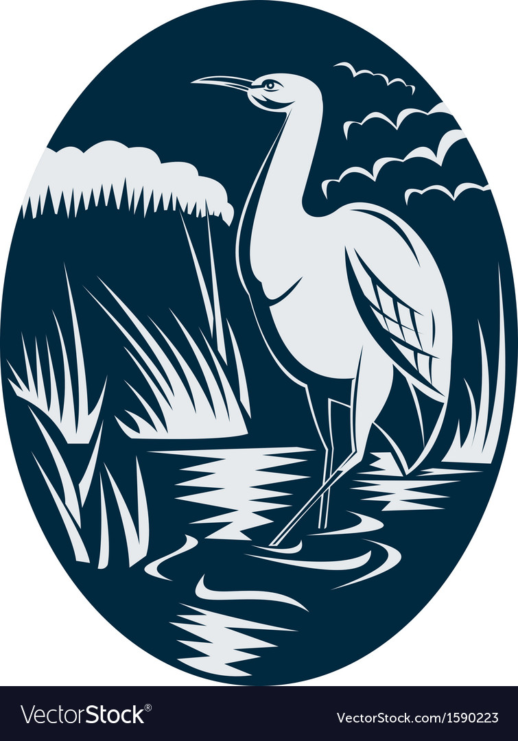 Heron wading in the marsh or swamp vector