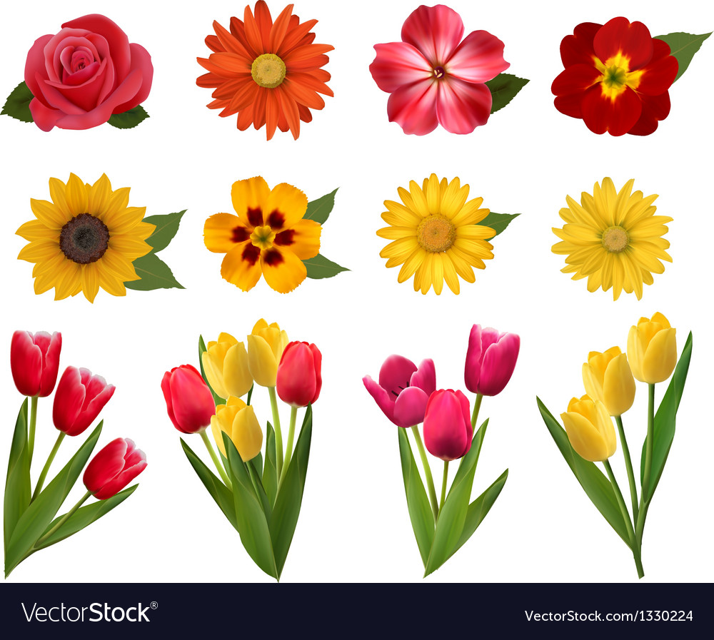 Set of beautiful flowers vector
