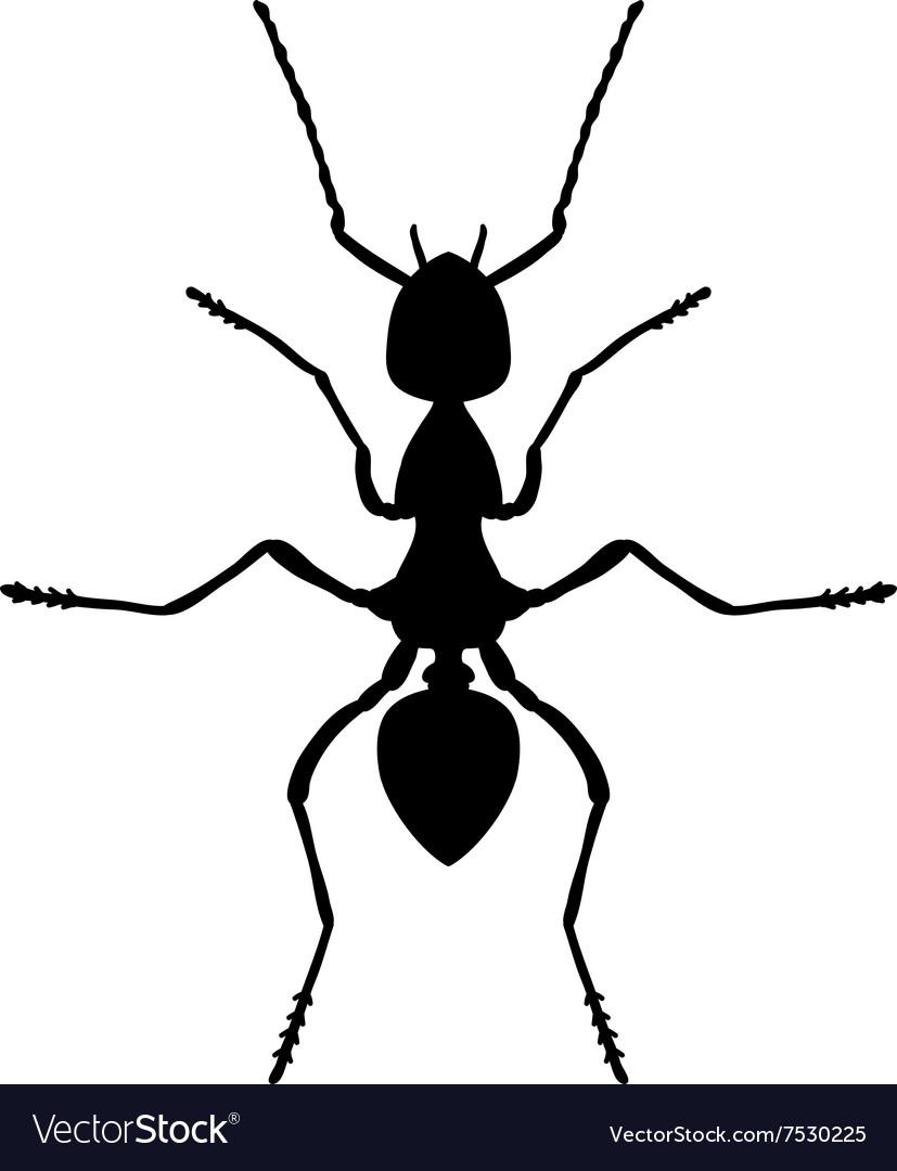 Insect anatomy silhouette formica exsecta sketch vector