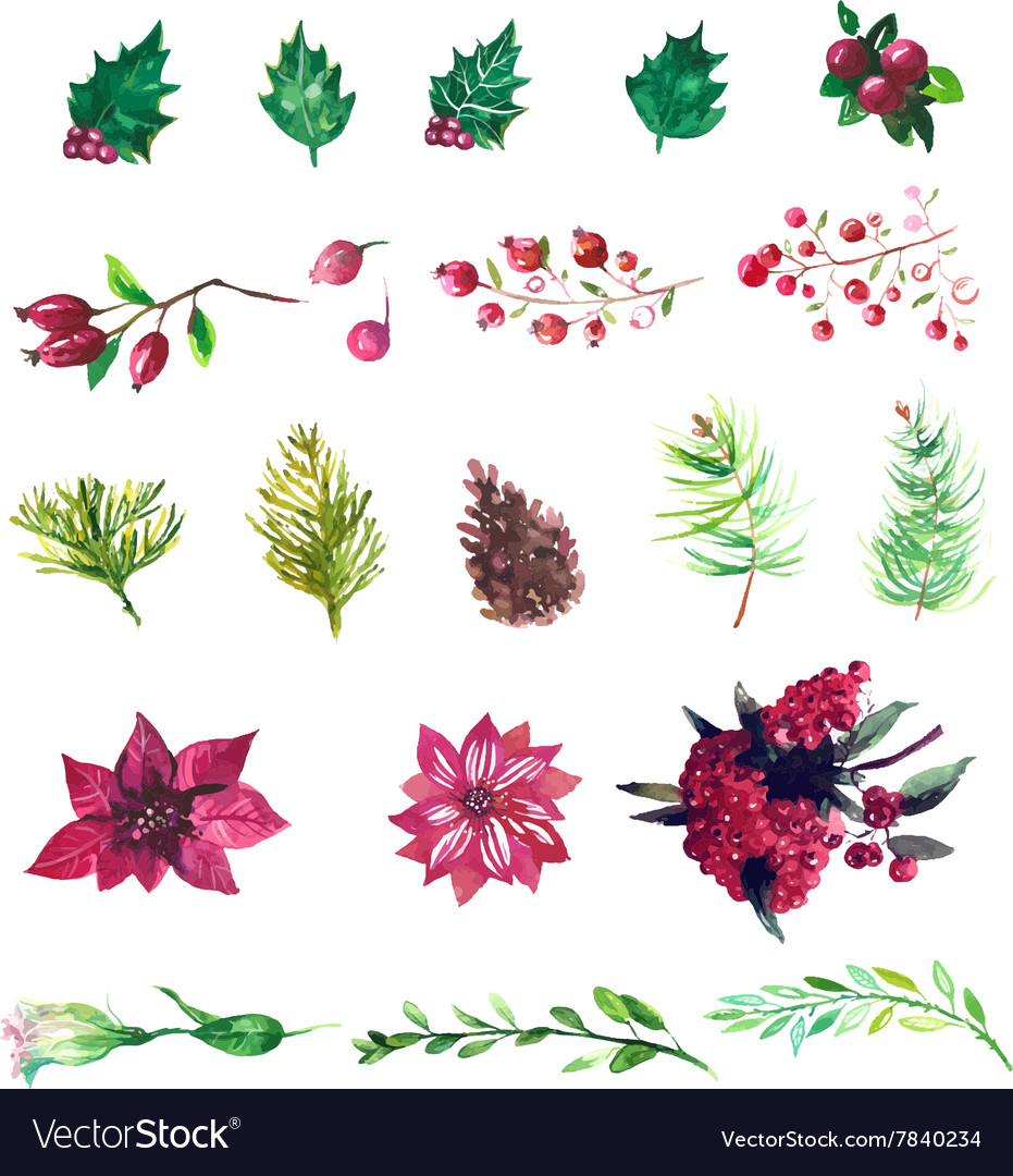 Set of watercolor flowers and berries vector