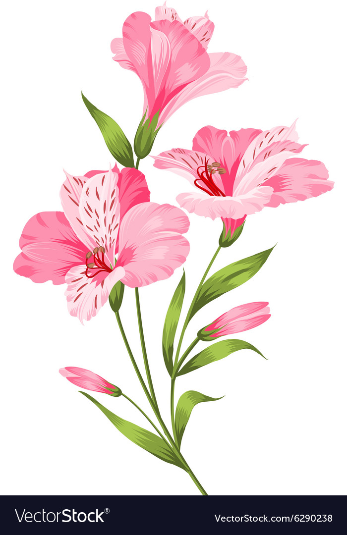 Alstromeria branch isolated on white vector