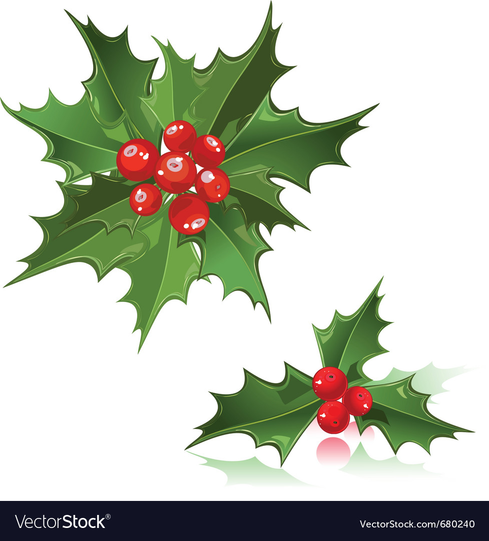 Christmas flower holly berry vector