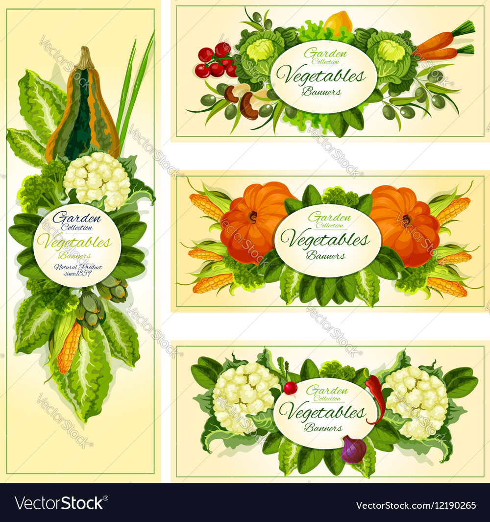Fresh vegetable banner set with copy space vector