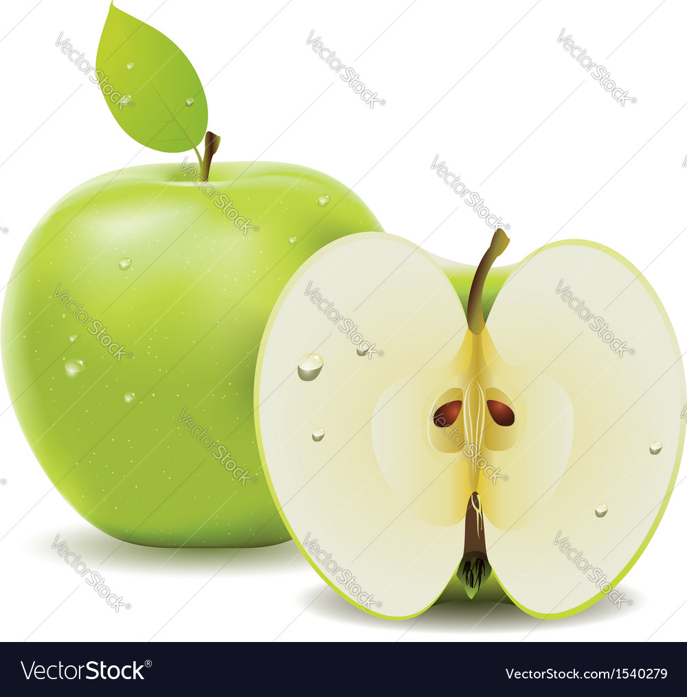 Green apple and half of apple vector