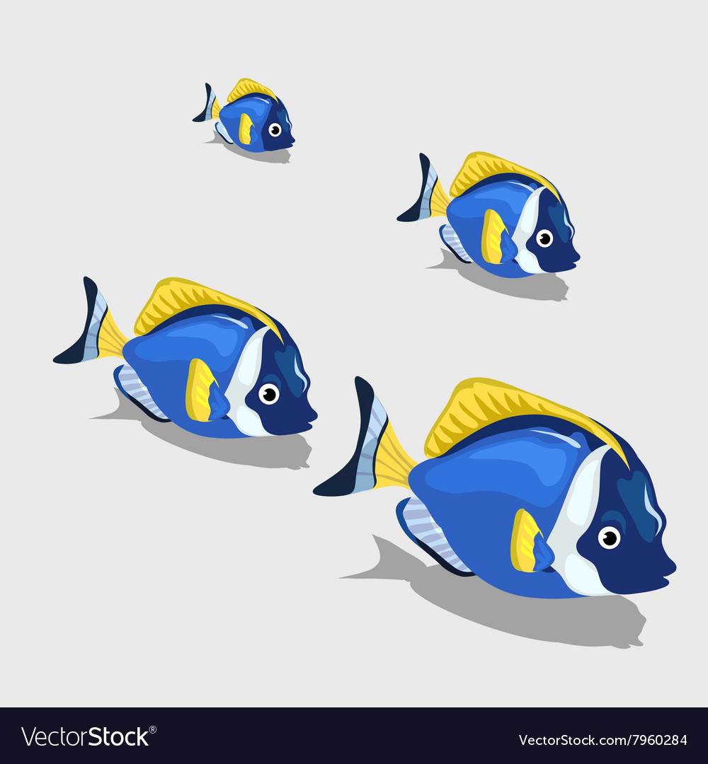 Blue tropical fish small and closeup isolated vector